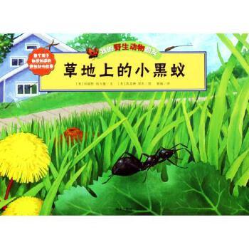 《草地上的小黑蚁/我的野生动物朋友